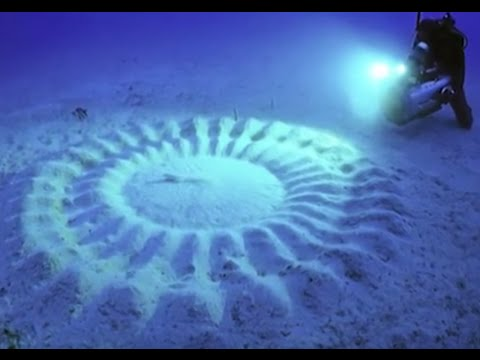 8 Most Mind Blowing Things That Can Be Found Underwater