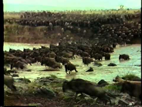 Vida Selvagem África Selvagem Parte 3 5