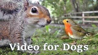 Videos for Dogs to Watch Extravaganza : Dog TV - 8 Hours of Birds and Squirrel Fun ✅