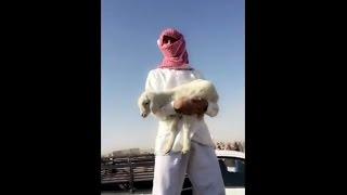 المضيوم انسرقو غنمه وبلغ على الشرطة وراح يبكي ههههههههههههه