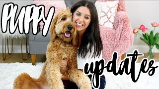 GOLDENDOODLE PUPPY UPDATES! DUDE'S FIRST TIME SWIMMING AND AGILITY CLASS!