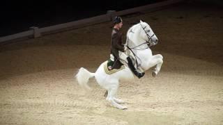 The Spanish Riding School of Vienna 07