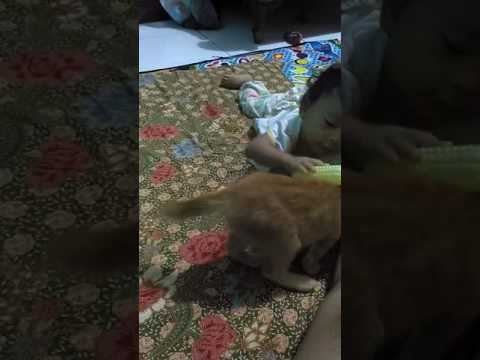 Women vs animal