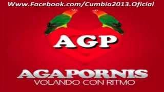 Agapornis - Donde Están Corazon