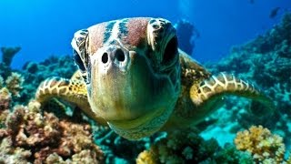 Coral Reef Adventure (full Documentary)