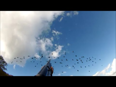 chasse pigeon en corse migration palombe 2014