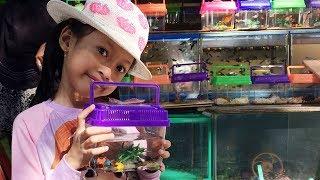 Bertemu Pedagang Ikan Hias ♥ Aqilla Beli Ikan Molly - Senangnya Aqilla Kasih Makan Ikan