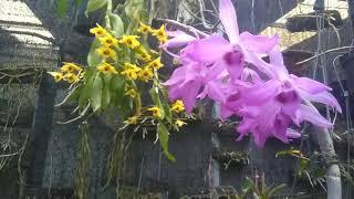 Những sai lầm khi chăm sóc hoa lan - P1