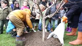 Çocuklar Meyve Ağaçlarıyla Tanışıyor