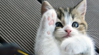 Just for smiles and laugh | Funny Cats and  Cute Kittens Compilation May 2016