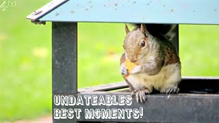 UNDATEABLES BEST MOMENTS