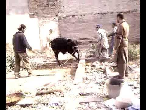 Bakra Eid 2009 Vairaa v s Pathan