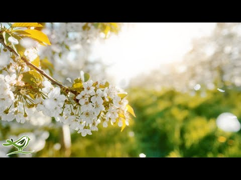 Beautiful Relaxing Music • Peaceful Piano Cello & Guitar Music by Soothing Relaxation