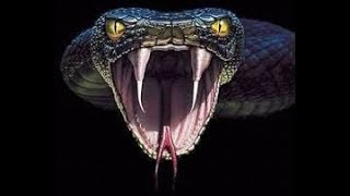 Pelicula        - Boa vs Python