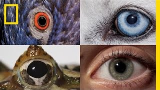 Watch: How Animals and People See the World Differently | National Geographic