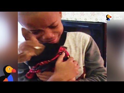 Boy Has BEST Reaction to Dog Adoption The Dodo