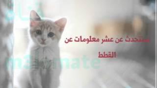 عشر معلومات غريبة عن القطط