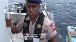 Pemeriksaan Kelengkapan Surat dan Alat Keselamatan di Perairan Pulau Ternate - 86