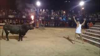 Cow Kills Man
