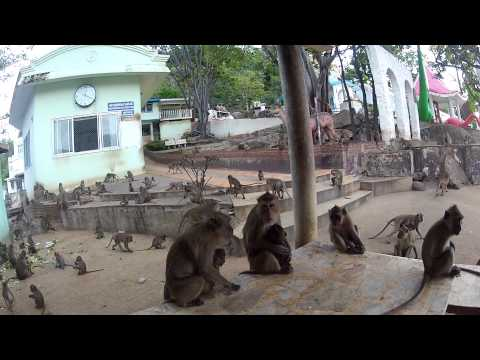 Dustin Watchman plays with monkeys @