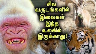 இந்த உலகத்தில் இருந்து விரைவில் காணாமல் போகஇருக்கும் உயிரினங்கள்! | Tamil Mojo!