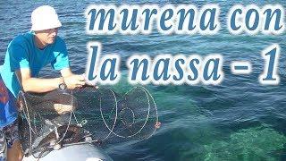 MURENA CON LA NASSA tentativo 1 come pescare una murena le murene gronchi anguille nasse