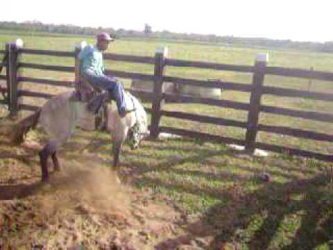 henrique amansado de cavalo chucro