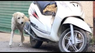 Best heart touching story of two dogs#### award wining short film