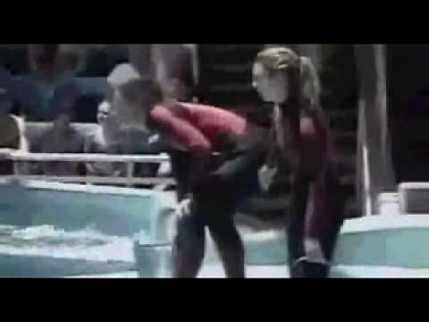 Momento do ataque da orca a treinadora em Orlando leecadeirante .br
