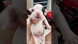 Puppy Just Wants to be Heard || ViralHog