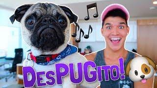 PUPPY'S NEW SONG!! (DesPUGito)