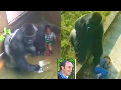 Xxx Mp4 He Fell Into A Zoo's Gorilla Pit When He Was Five But What Happened Was Incredible 3gp Sex