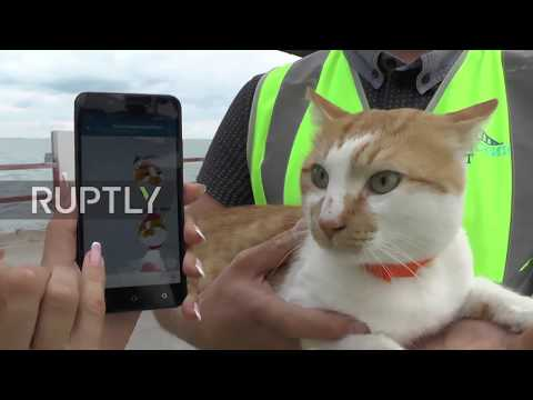 Pawsome! Mostik the cat becomes unofficial construction foreman at Crimean Bridge