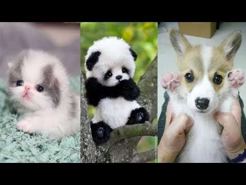 Cute baby animals Videos Compilation cute moment of the animals Soo Cute 7
