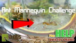 Ant Mannequin Challenge + Name Voting | Entering the Nest: Yellow Crazy Ants