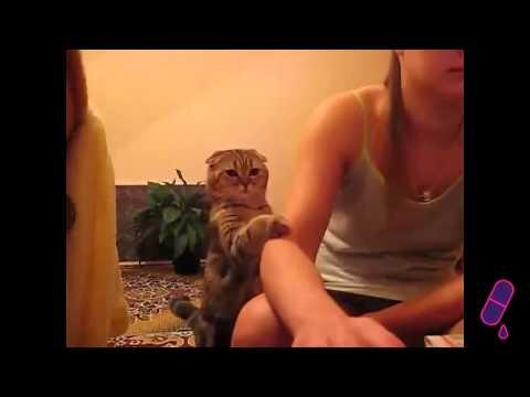 Cele mai tari faze cu pisici 2013