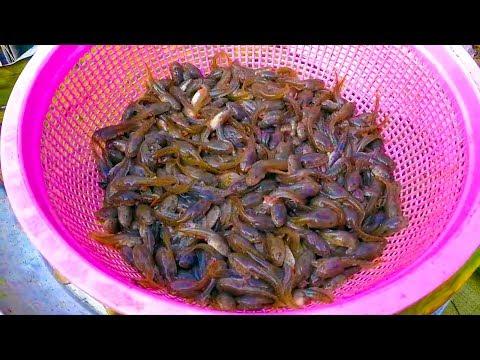 Xxx Mp4 Amazing Food In Tarad Krong Tom Ban Kramthoa Asian Street Food Vdo 3gp Sex