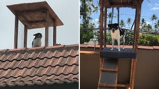 Dog Gets Custom-Built Watchtower to Keep an Eye on Things at Home