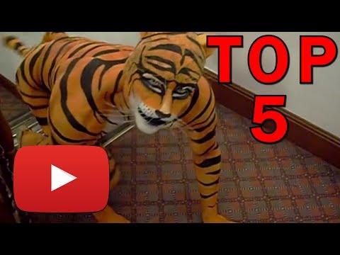 Xxx Mp4 Top 5 Nejdivnějších Videí Na Youtube 3gp Sex