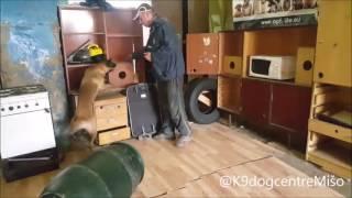 Dual Purpose Dog - Training