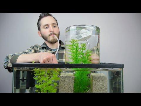 Make A Vacuum Suspended Fish Tank