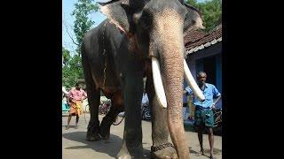 Chullipparambil Sooryan/ Nanu  Ezhuthassan  Sooryan/ star elephant/ kerala elephant