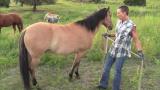 Horse Power: ClarePainter / Natural Hoof Care and Trimmer
