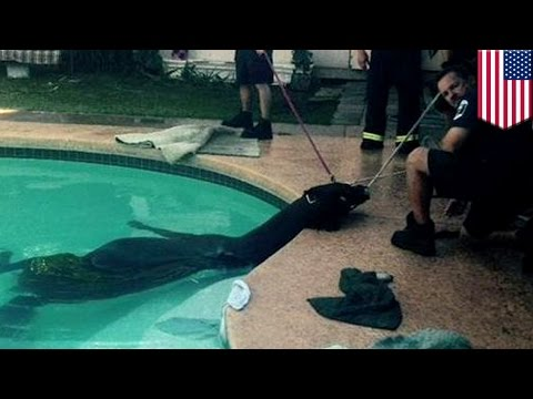 Strażacy ratują konia tonącego w basenie