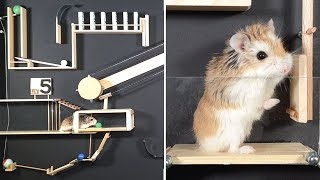 MAJOR HAMSTER vs DOMINOES & MARBLES - Amazing CHAIN REACTIONS