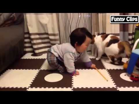 Funny baby   Funny animls   Funny dogs   compilation of funny videos of babies and animals#1