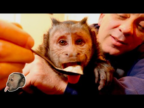 Xxx Mp4 Monkey Sardine Challenge 3gp Sex