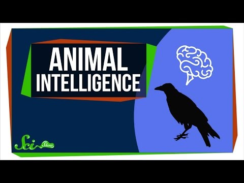 How Smart Are Animals Really