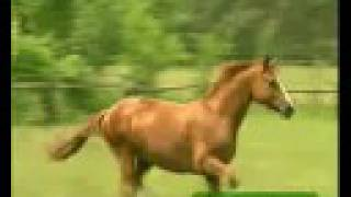 The Final Countdown - Horses