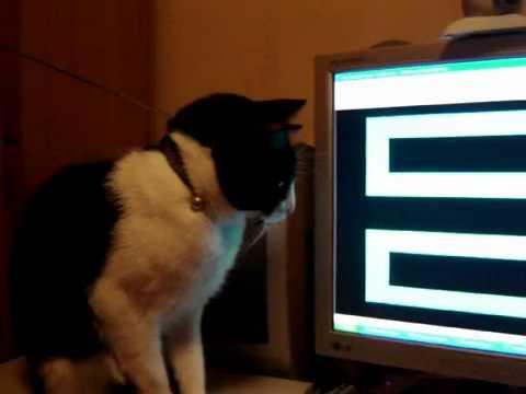 Los gatos tambien se asustan.flv